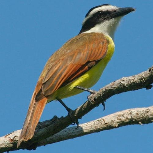 Conservation Latin America 78